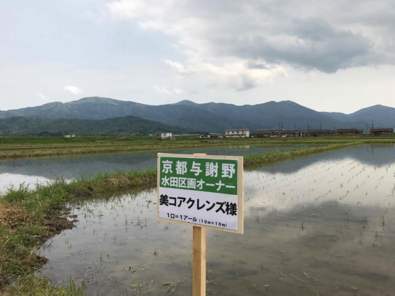 京都で美コアクレンズ玄米作り開始!/山口絵里加
